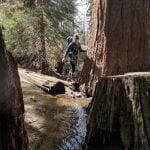 Mah Redwoods