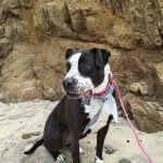 Roxy in front of a cliff