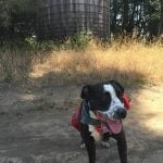 Roxy going on a hike