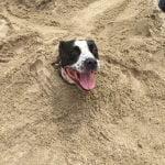 Roxy enjoying the beach